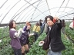 社会人サークル/苺狩り